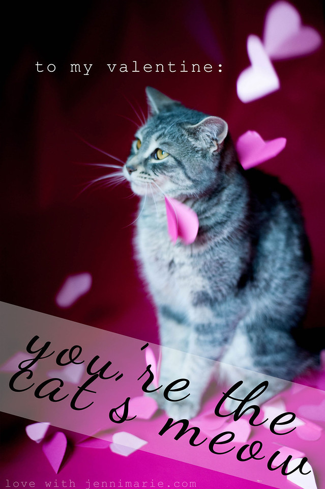 you're the cats meow. kitty valentine.