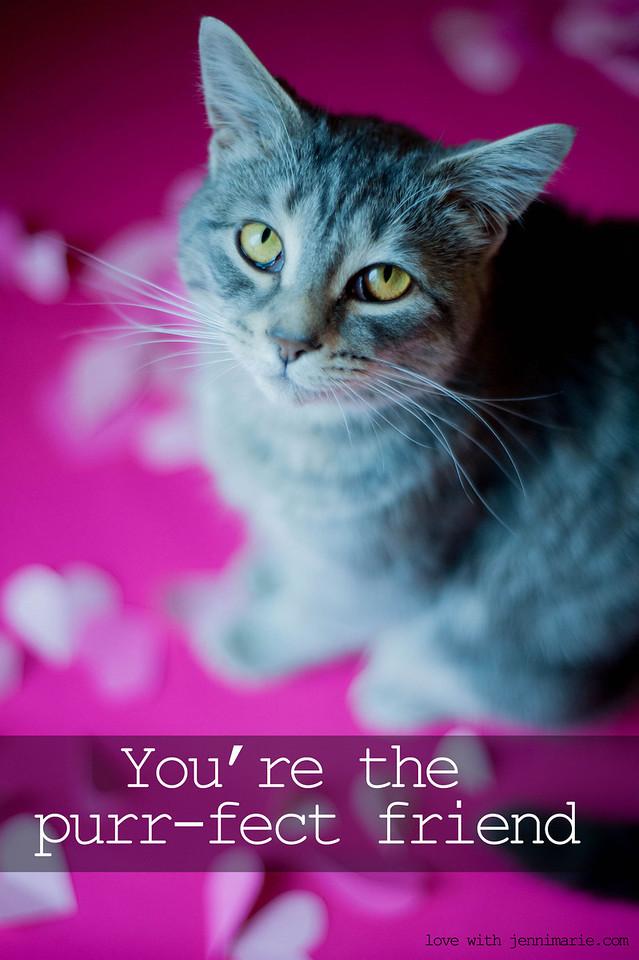 Cat's Meow.